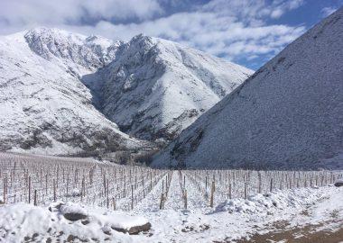 Viñedos de Alcohuaz nevados a mediados de agosto 2017.